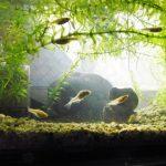 メダカの稚魚の育て方!容器や水替え、生存率を上げる方法