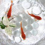 金魚の水換えに必要な道具と方法・頻度について