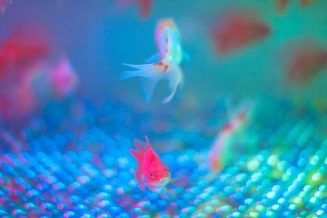 金魚の塩浴の効果と正しい方法について