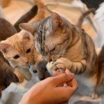 猫の餌の種類・量・回数と食べない原因と対処法について