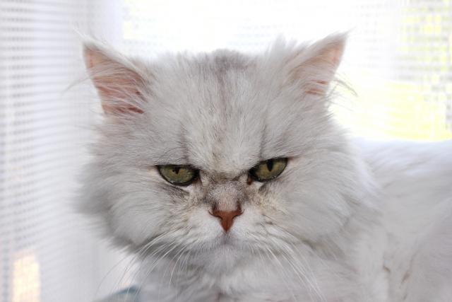 猫が吐く原因と嘔吐物別の対処