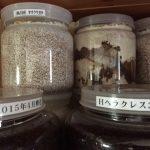 クワガタの幼虫のマット・菌糸ビン・ペットボトルを使った育て方