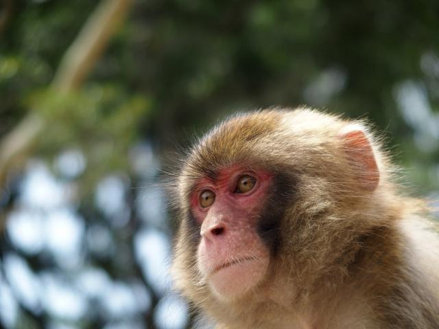 ペットとして飼える猿の種類は?飼育の注意点はあるの?