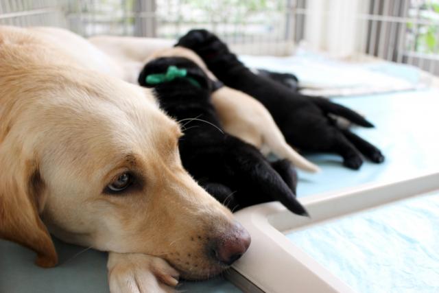 ペットの消臭方法と注意する事