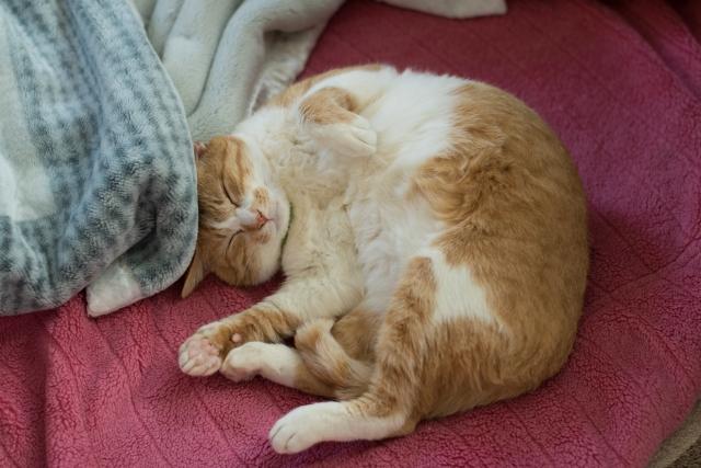 猫がゴロゴロと喉を鳴らす理由と効果!噛むのは何故?