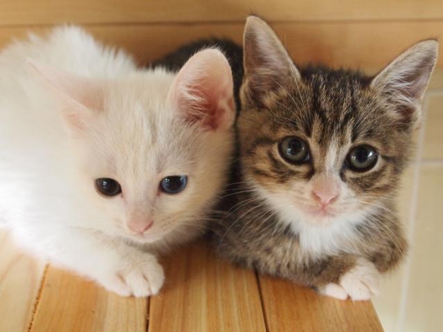 猫アレルギーは治るの?症状・原因や検査法、対処法などについて