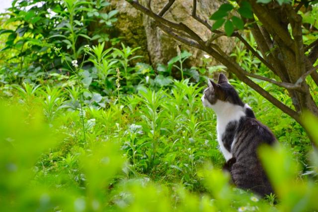 猫草の効果と吐く・下痢の対処、育て方と長持ちのコツ