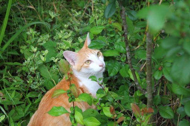 猫のまたたびの効果や危険性!いつから与えていいの?