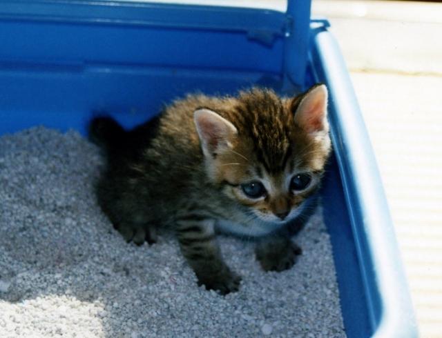 猫のしつけの基本とトイレ・テーブルに上がる・噛む・爪とぎのしつけ方
