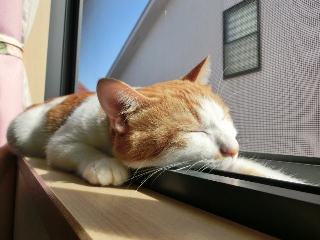 初めての猫の飼い方~生態・道具・費用など基本的な7つの事