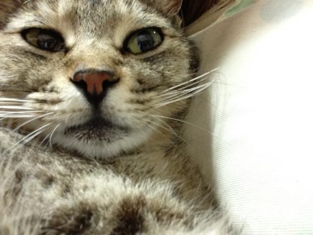 猫ノミの症状・駆除方法・予防方法と人間への影響について