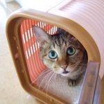猫のワクチン接種は必要?費用や頻度、副作用について