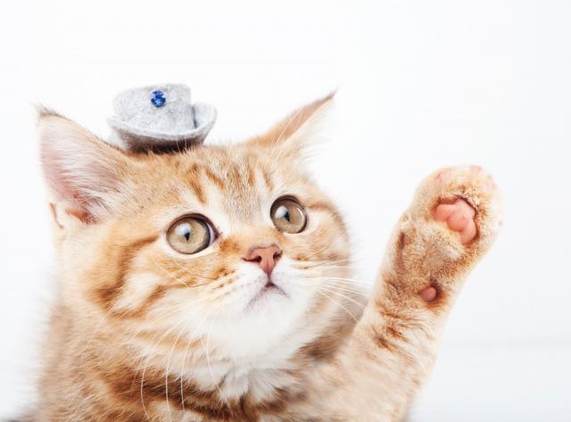 飼いやすい猫の種類6選