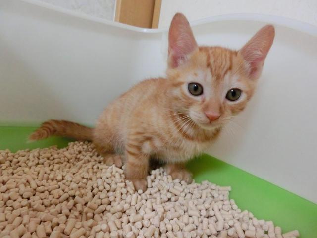 猫の膀胱炎の症状や原因、予防方法や治療費などについて
