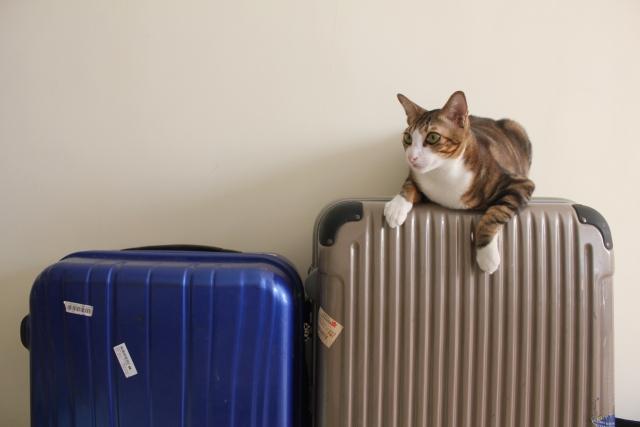 猫の留守番の準備と注意点!