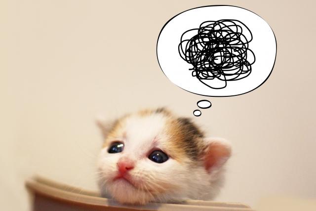 猫の寄生虫の駆除・種類・感染経路について!人にうつる可能性は?