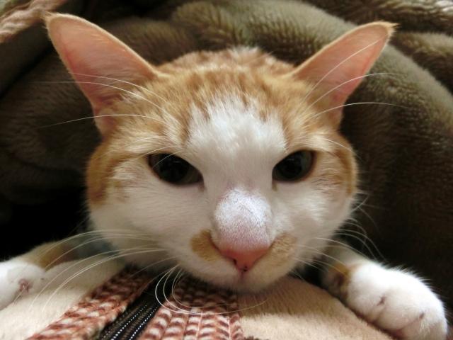 猫が一緒に寝る理由と問題点!病気になる事もある?