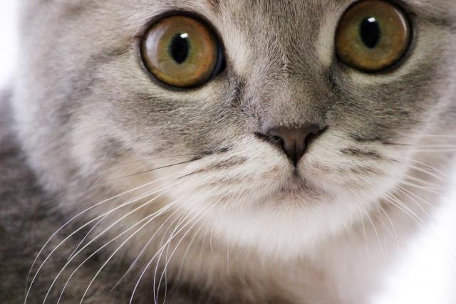 猫のひげの役割と抜ける原因!お守りにする理由や保管方法について