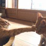猫がよだれを垂らす7つの原因!対処が必要な場合とは?