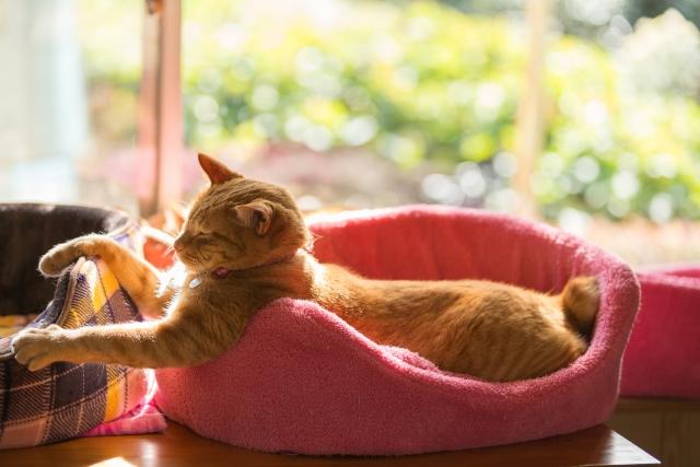猫の部屋飼いで気を付ける事