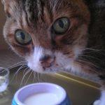 猫に牛乳がダメな理由と与える時の注意点!