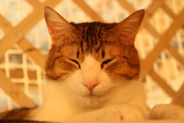 猫の駆除方法と保健所について