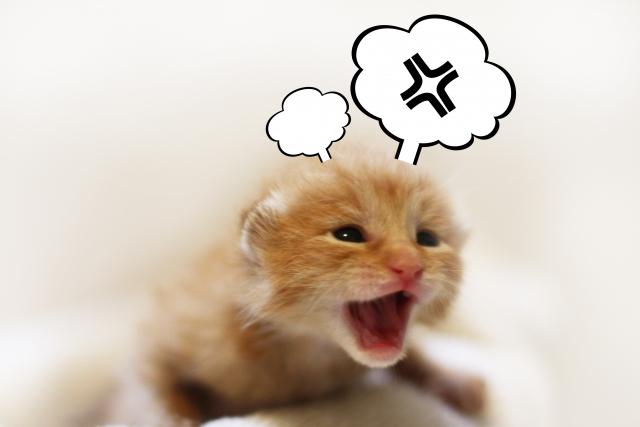 猫がストレスを感じたときの症状と手軽にできる解消法