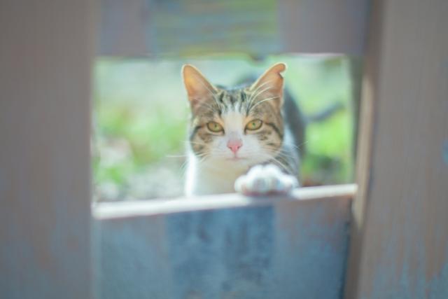 猫が脱走する理由と対処法!防止策はどうすればいい?