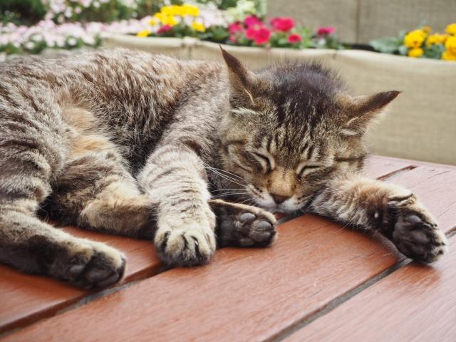 猫がけいれんを起こす原因と対処法!疑われる病気とは?