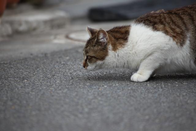 猫が後をついてくる理由と対処法