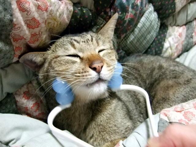 猫のしゃっくりの原因と対策、止め方!病気が分かる事もあるの?