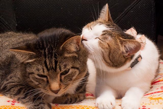猫が頭突きをするには理由がある?仲良くなるための対処法