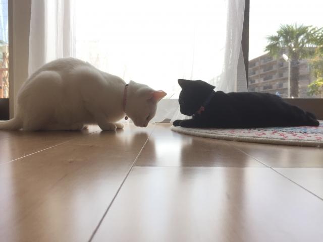 猫の去勢後の変化と術後の注意点!発情はしなくなる?