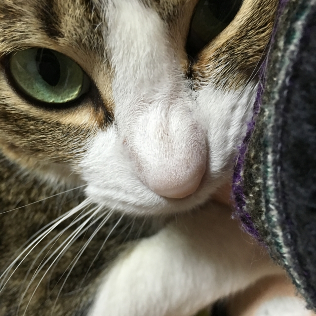 猫にも生理はあるの?出血が見られたらどうすればいい?