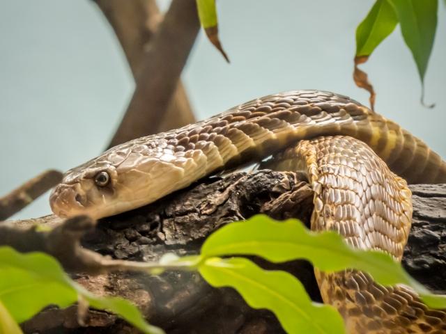 ペットの蛇の値段と餌!飼育上の注意点とは?