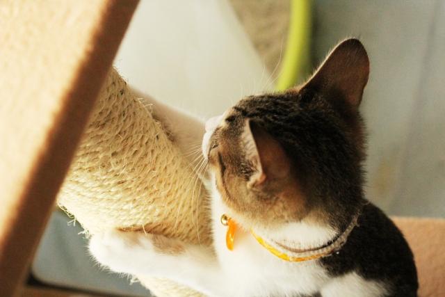 猫が爪研ぎをする4つの理由と対策・しつけ方について