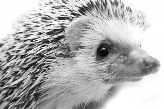 小動物の飼育に役立つ記事まとめ